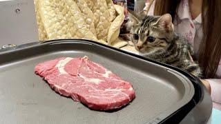 子猫の目の前でステーキを焼くとこうなりますw
