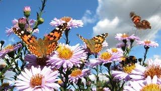 Последний день лета. Обзор сада огорода
