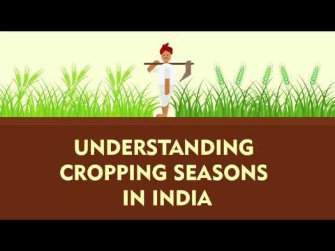 Understanding Cropping Seasons in India