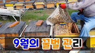 #Bee#양봉관리#진드기 9월의 꿀벌관리