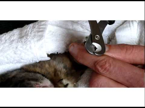 hqdefault rabbit care clipping your rabbits claws cutting nails youtube