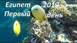 Египет 2019 Шам Эль Шейх Первый день. Отель, пляж, море, ужин, магазины.