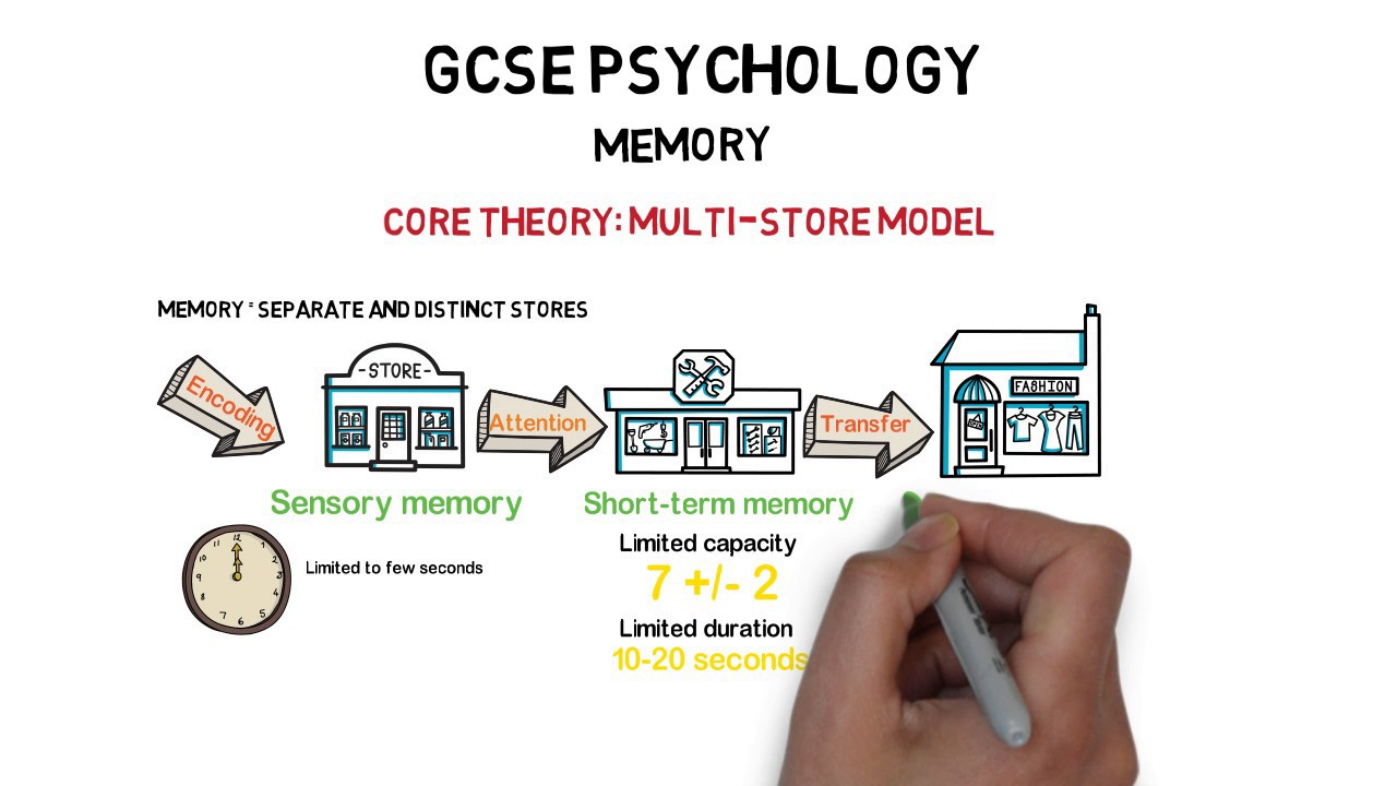 multistore model of memory The multi-store model of memory is a good place to start when studying memory as it was the first widely accepted model of how memory works it is, however, not the definitive explanation of memory, and different areas are expanded on in other articles.