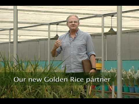 Golden Rice: fighting vitamin A deficiency in the Philippines and Bangladesh