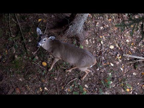 John's Archery Rut Season 2019 - Pennsylvania Bow Hunting Whitetail Deer - Western Pa 2D