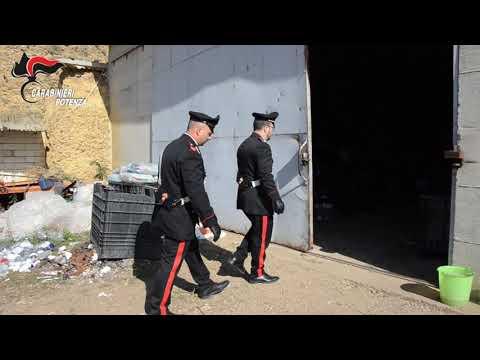 """Operazione """"Indica"""" carabinieri comando ..."""