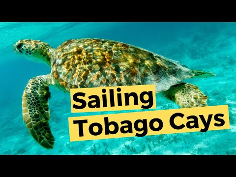 Tobago Cays - St Vincent & the Grenadines (Video 41) - Sailing Britican
