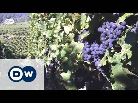 The German Wine Route | Euromaxx