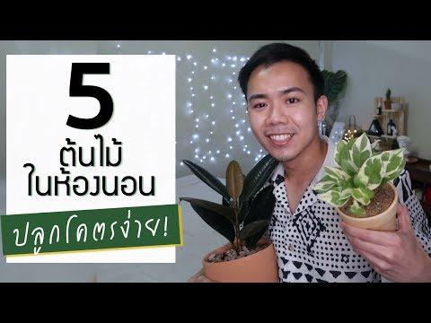 แนะนำต้นไม้ในห้องนอน 5 ชนิดที่เลี้ยงง่าย เหมาะกับมือใหม่ | Uncle Bank