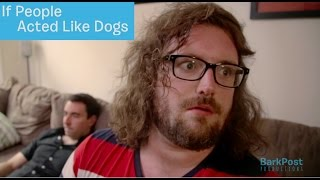 There Is No Greater Threat Than Whoever Rang That Doorbell | IF PEOPLE ACTED LIKE DOGS
