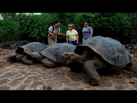 10 Returning Extinct Animals That Are Still Alive