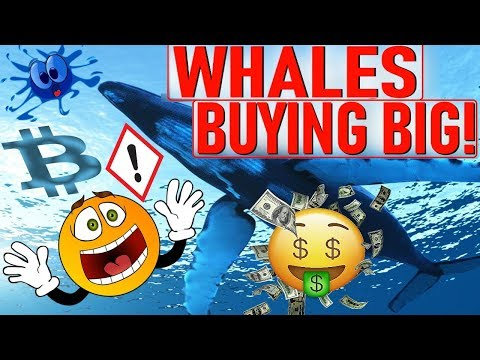 WHALES BUYING BIG!  SELL OFF INDICATOR!  BIG TROUBLE FOR CRYPTO STILL? BIGGEST MANIPULATION TO DATE!