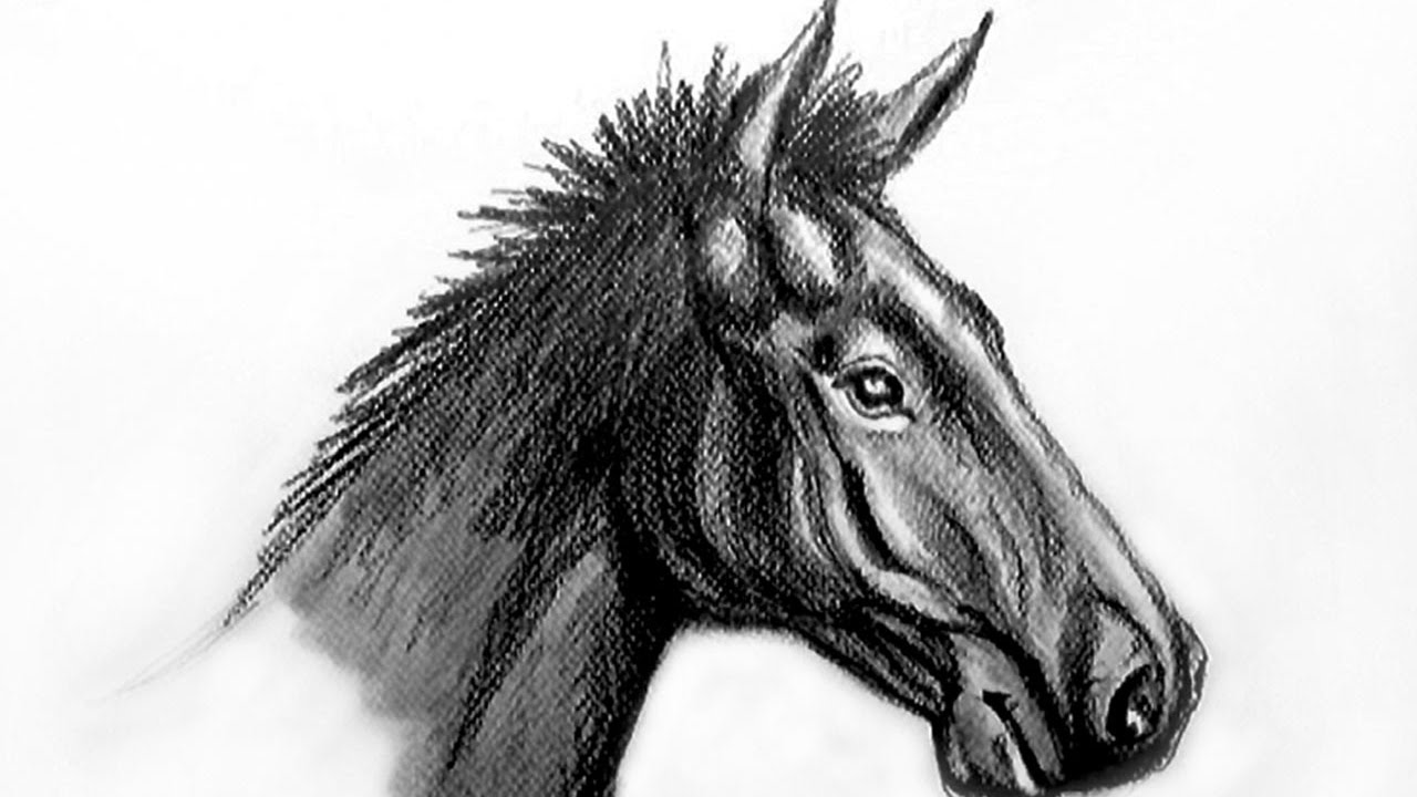Comment Dessiner Un Cheval Realiste Youtube