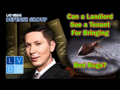Can a landlord sue a tenant for bringing bed bugs into the unit?