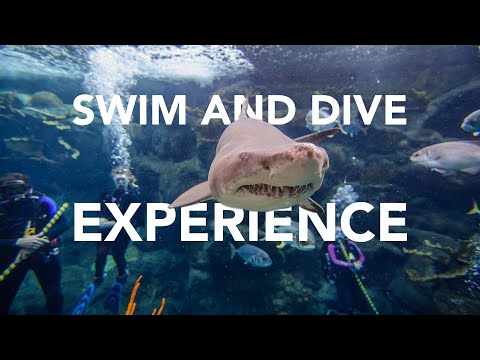 Swim & Dive Experiences