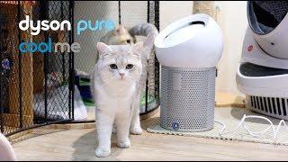 รีวิว Dyson Pure Cool Me | พัดลมกรองอากาศส่วนตัว เจ๋งอะ