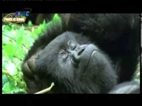 ww.cazin.NET - Priče iz šume 1 - Novogodišnji RTV Cazin 2014