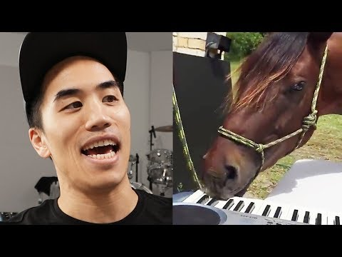 I wrote a song with a horse who plays piano