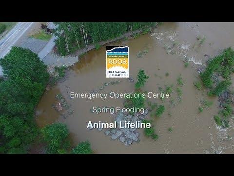 RDOS Spring Flooding   Animal Lifeline