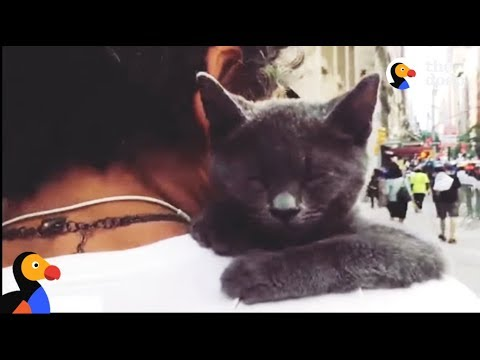 ADORABLE Cat Loves Doing Dog Things | The Dodo