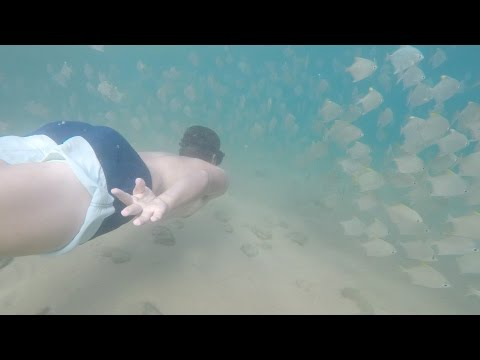 Inhaca Island life and Snorkelling MOZAMBIQUE