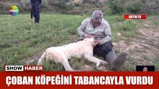 Çoban köpeğini tabancayla vurdu