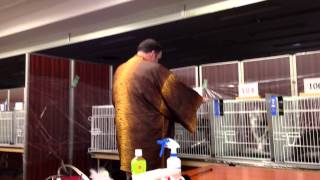 Ecc Cat Show 01/19/2013 Pajocoons Sunrise Dream Of Popokilani By Harley Devilbiss