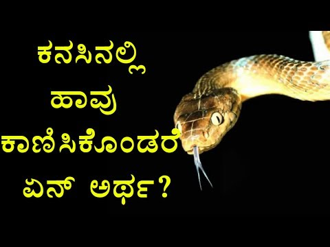 Snake Dreams | What Happens When You Get Snakes In Your Dream? | Oneindia Kannada