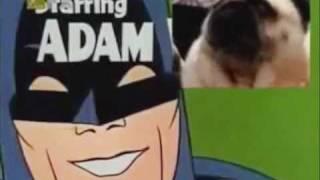 Собака зовет Бетмена! batman pug (batnorton.com) .wmv