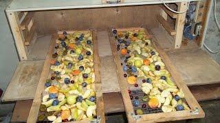 видео Сушилка для овощей и фруктов своими руками. Сушилка из холодильника