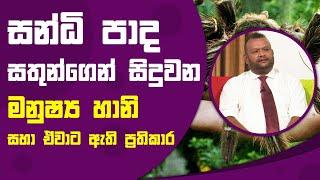 සන්ධි පාද සතුන්ගෙන් සිදුවන මනුෂ්ය හානි සහා පවතින ප්රතිකාර| Piyum Vila | 06 - 10 - 2021 | SiyathaTV Thumbnail