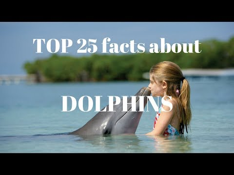 TOP 25 facts about dolphins you didn