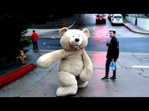 TEDDY BEAR VS STEEP HILL