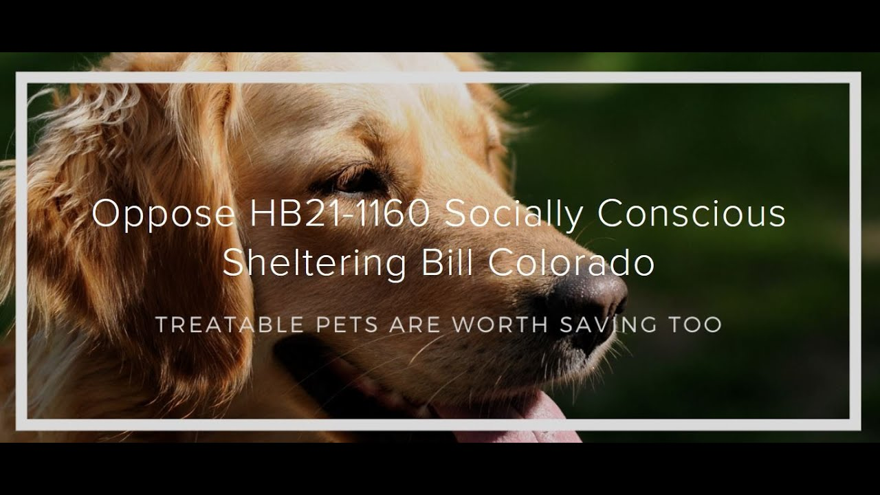 No Kill in Motion: Our Opposition to Colorado House Bill 21-1160