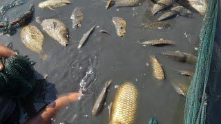 شاهد كيف يتم صيد سمك في لبحيرات اليوم 🤗ماشاء الله