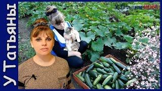 Секреты по выращиванию кабачков. Эффективные советы по выращиванию кабачков.