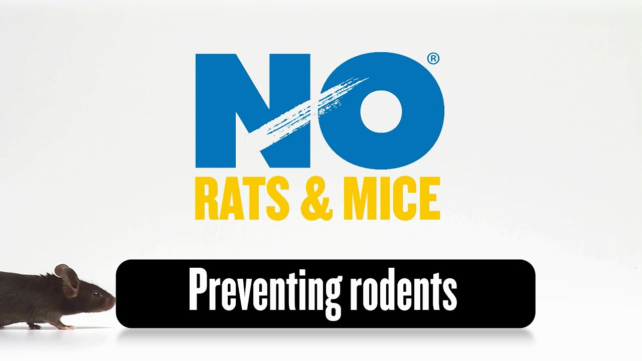 Advice - Video on How to Prevent Rodents Getting In