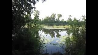 Рыбалка на коропа и карася ! Часть 1 Sport Fishing Херсон