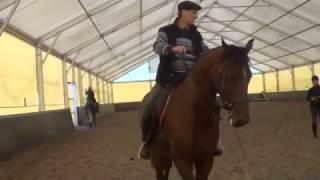 Конный спорт об учение. Кизимов М.И. Мягкий повод от подведённого зада,