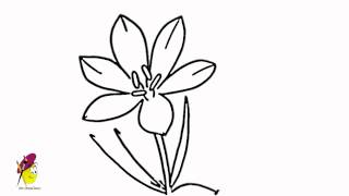 Blossom Crocus flower - How to draw Flowers