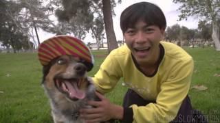 А ваша собака умеет так ? :)
