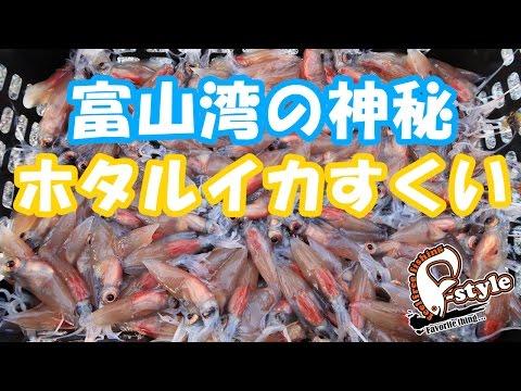 富山湾 ホタルイカすくい