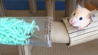 Tube Maze for Funny Hamster Jerry 🐹