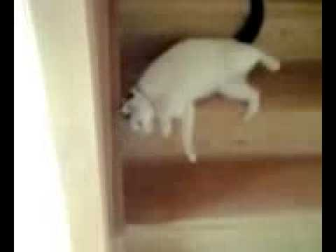 Catting Down The Stairs - Funny Video Free Download [wapsilo.com]