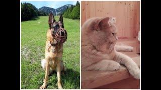 Почему собака должна быть в наморднике и на поводке в лесу? Наше утро. Отпуск с кошкой и собакой.