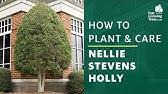 Nellie Stevens Holly Plantingtree Youtube