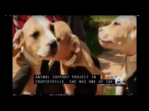 Dog fighting ring busted through AL, MS, GA & TX