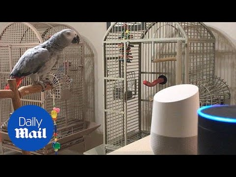 Petra The Parrot Orders Alexa To Turn Off The Lights