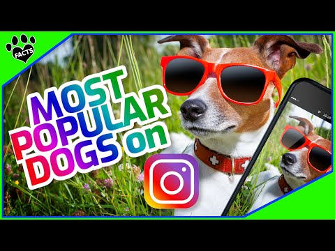Most Popular Dog Breeds on Instagram