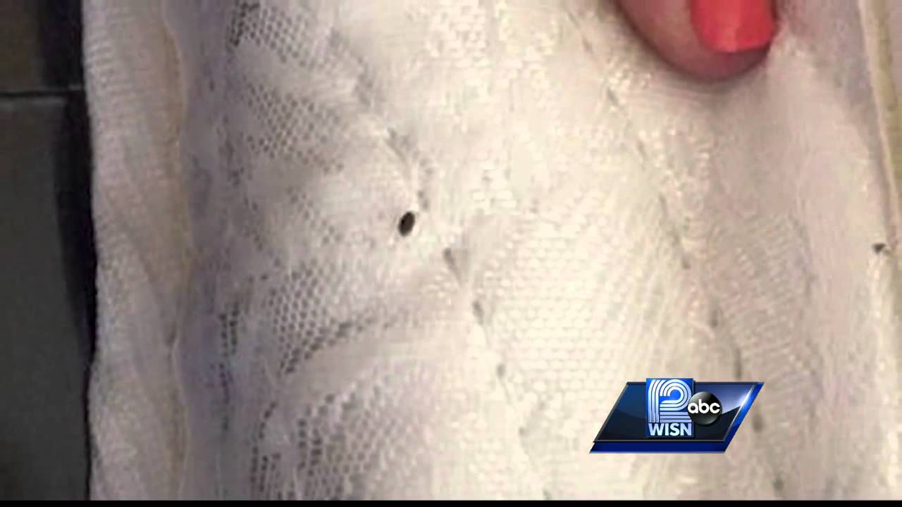 More Reports Of Bed Bugs At Wisconsin Dells Hotel
